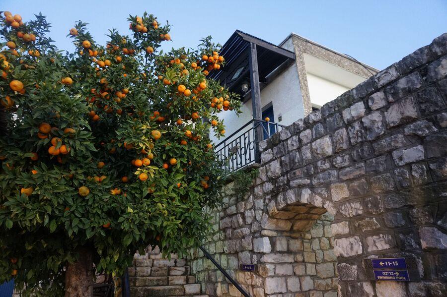 Отель и апельсиновое дерево в Цфате
