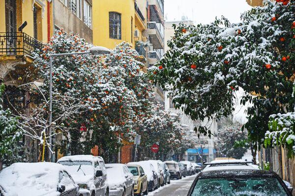 Заснеженные апельсиновые деревья на одной из улиц Салоников