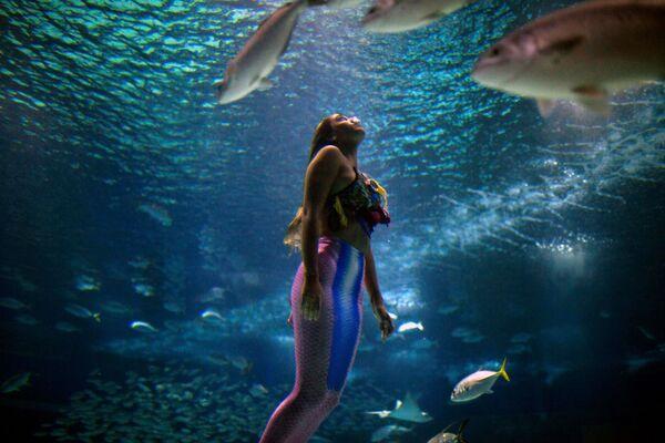 Студентка-биолог из Бразилии Изабела Кардосо плавает в костюме русалки в океанариуме AquaRio в Рио-де-Жанейро, чтобы привлечь внимание к проблеме загрязнения океана