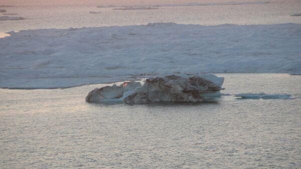 Поле старого льда
