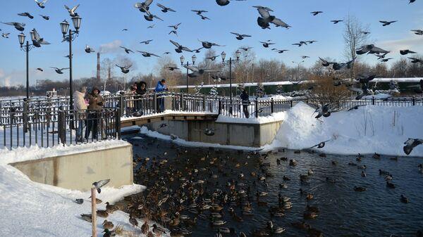Горожане кормят птиц в Центральном парке культуры и отдыха в Мытищах.