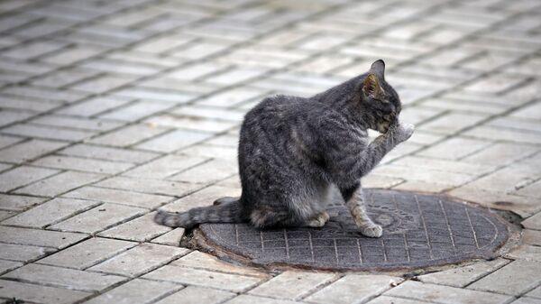Кошка на территории парка в Горячем Ключе