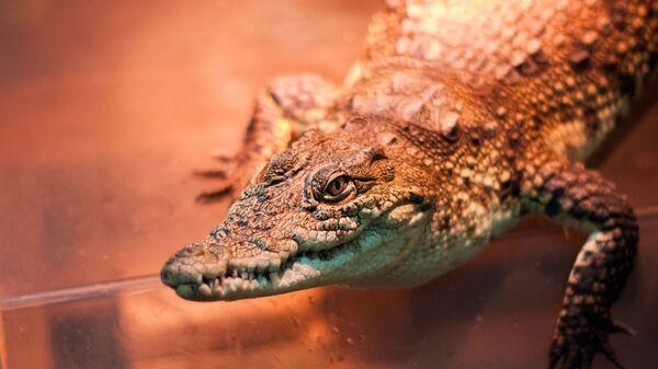 Крокодил, которого нашли на помойке