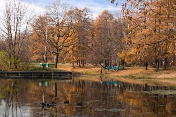Осень в Сокольниках. Архив