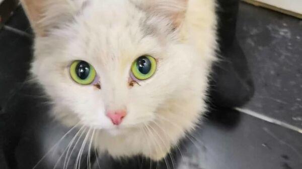 Кошка, найденная под капотом автомобиля работниками сервисной станции Hyundai Картель Авто