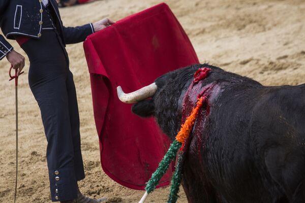 Тореадор во время корриды на карнавале быков в Сьюдад-Родриго