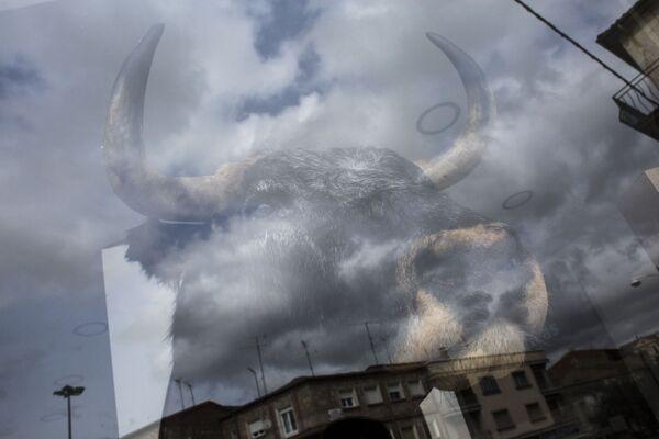 Чучело быка в витрине одного из магазинов в Сьюдад-Родриго
