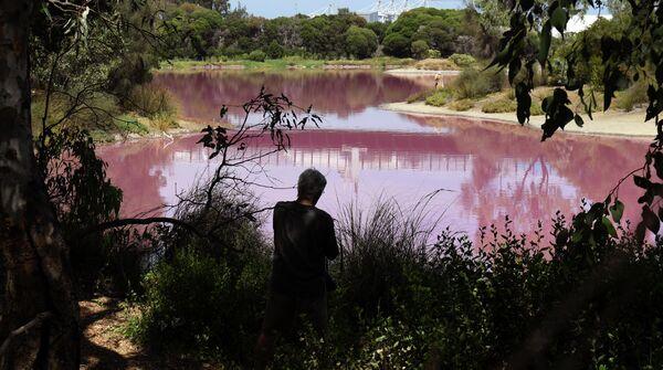 Озеро в парке Вестгейт, которое окрасилось в розовый цвет в Мельбурне, Австралия