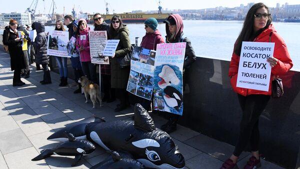 Участники пикета в защиту белух и косаток в бухте Средняя в Приморье. 16 марта 2019