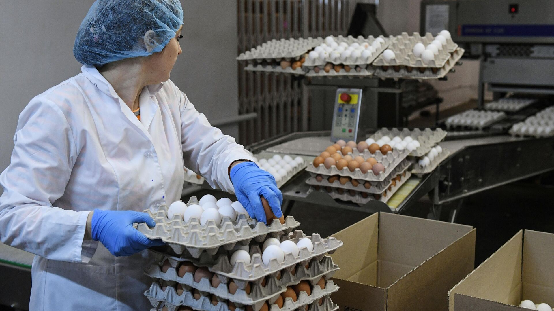 Сотрудница на участке сортировки яиц на птицефабрике Ново-Барышевская в Новосибирской области - РИА Новости, 1920, 03.02.2021