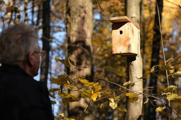 Скворечник на дереве на территории природно-исторического парка Битцевский лес в Москве