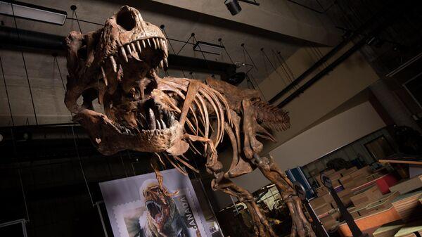 Скелет динозавра Скотти