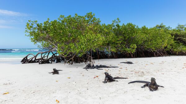 Игуаны на Галапагосских островах