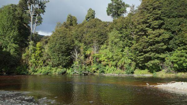 Национальный парк Кауранг в Новой Зеландии