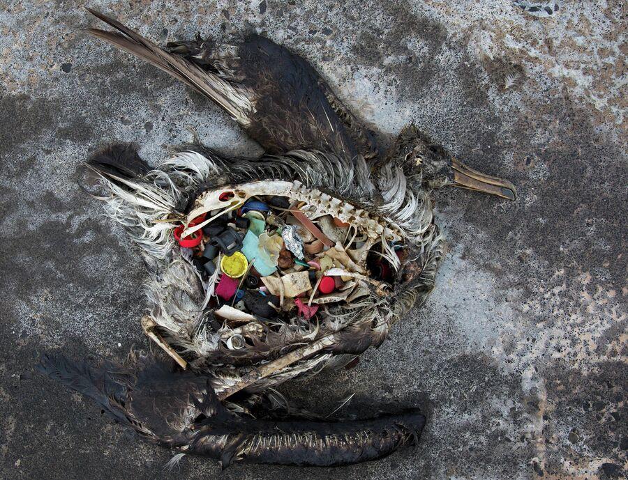 Мертвый альбатрос на отдаленном атолле в Тихом океане