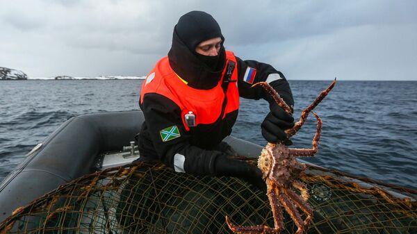 Сотрудник береговой охраны пограничного управления ФСБ России по Мурманской области выпускает пойманного браконьерами камчатского краба в Баренцевом море