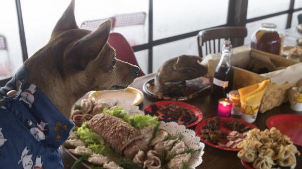 Собака у стола во время празднования Дня Терра Мадре - 2018