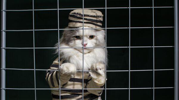 В США адвокату пришлось вызволять кошку из тюрьмы