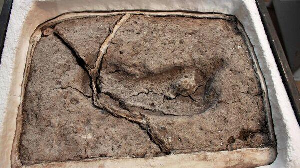 Самый древний человеческий след на американском континенте возрастом около 15,6 тысяч лет, обнаруженный группой ученых из университета Austral в Чили (UACH)