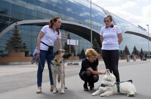 Сотрудники фонда Вторая жизнь на территории аэропорта Домодедово