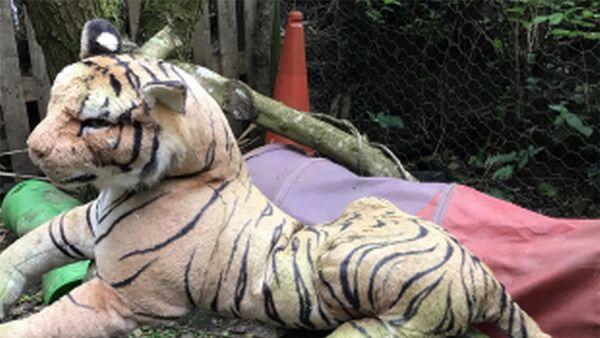 Игрушечный тигр в Девоне