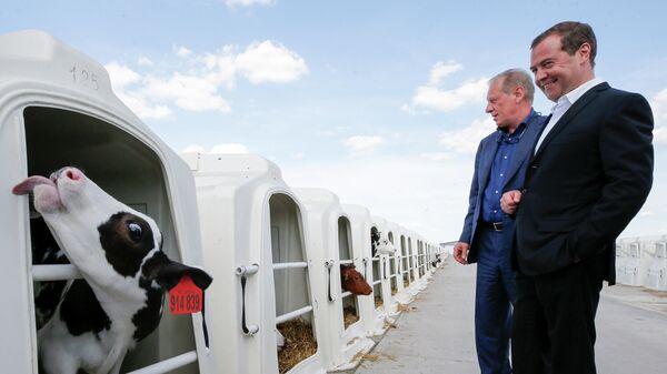 Председатель правительства РФ Дмитрий Медведев во время посещения  сельскохозяйственного предприятия Заречье в Воронежской области