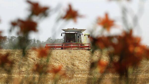 Уборка озимой пшеницы на поле