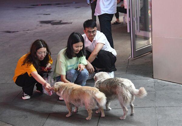 Девушки кормят собак на одной из улиц в Хух-Хото в Автономном районе Внутренняя Монголия в Китае