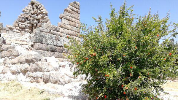 Турция. Дерево граната у Ворот Миндоса в Бодруме