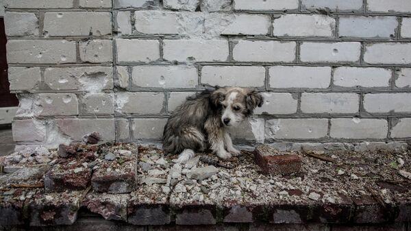 Собака во дворе дома в Славянске, где разорвался снаряд