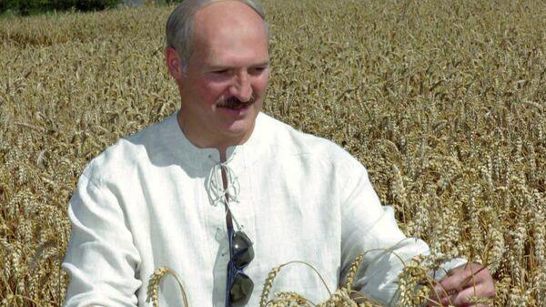 Президент Республики Беларусь Александр Лукашенко во время посещения сельскохозяйственного производственного кооператива Октябрь-Гродно Гродненского района