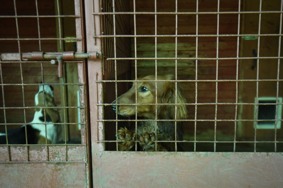 В штате отделения исследования запаховых следов человека ЭКЦ ГУ МВД России по Московской области десять собак-детекторов