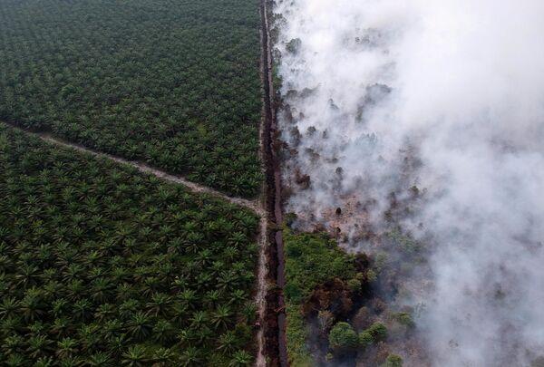 Лесные пожары в Муаро-Джамби в Индонезии