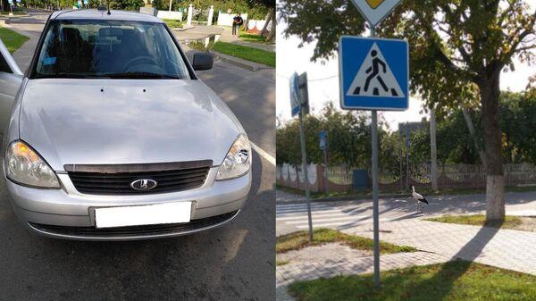 ДТП с участие аиста в городе Столин Республики Беларусь. 5 августа 2019