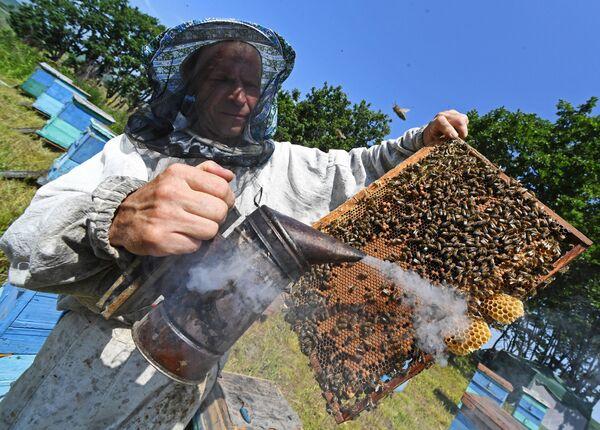 Пчеловод Сергей Пальчук обкуривает рамку с сотами при помощи дымаря на пасеке в окрестностях села Раковка в Приморском крае