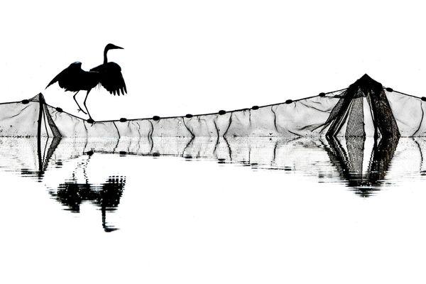 Работа фотографа Jozsef Gergely, занявшая второе место в категории Поведение птиц в фотоконкурсе Bird Photographer of the Year 2019