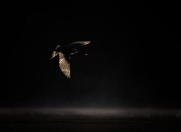 Работа фотографа Georgina Steytler, занявшая второе место в категории Птицы в полете в фотоконкурсе Bird Photographer of the Year 2019