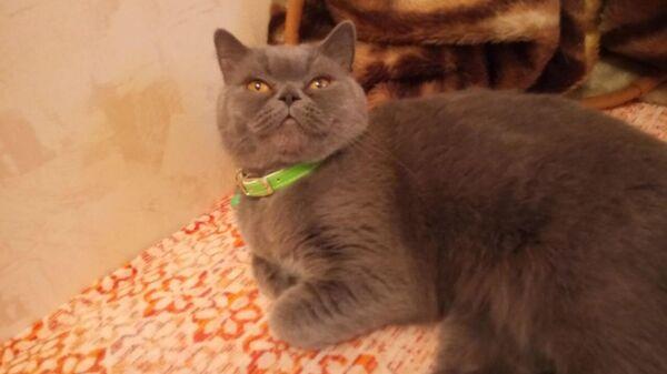 Фотография кошки из объявления о продаже, опубликованного на сайте Avito