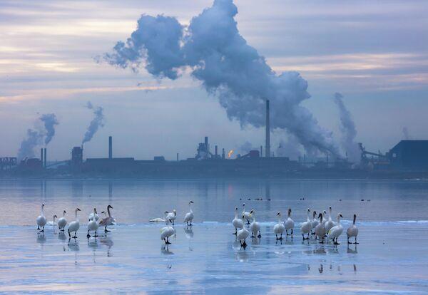 Работа фотографа Meera Sulaiman, занявшая второе место в категории Садовые и городские птицы в фотоконкурсе Bird Photographer of the Year 2019