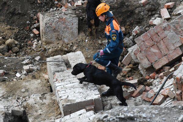 Сотрудник МЧС РФ с собакой на месте завалов, где обрушилось перекрытие в строящемся здании в Новосибирске