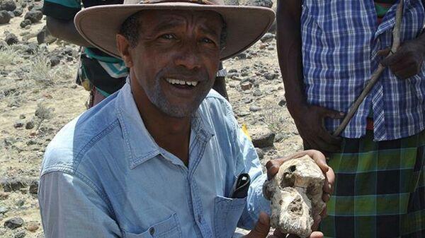 Сохранившийся череп анамского австралопитека, найденный в Эфиопии