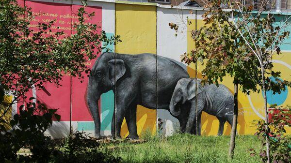 Стрит-арт фестиваль URBAN MORPHOGENESI. Слоны