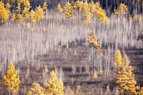 Осенний лес на Титовской сопке