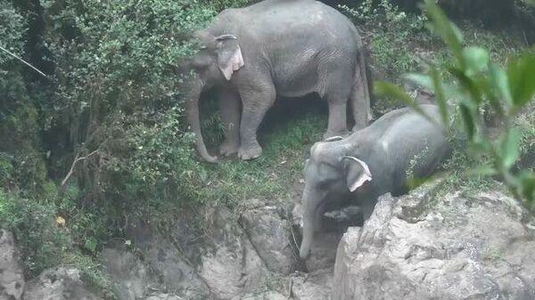 В Таиланде погибла семья слонов