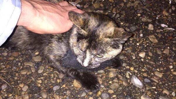 Сотрудники ИК-10 УФСИН России по Республике Татарстан пресекли попытку доставки в колонию предположительно наркотического вещества с использованием кошки