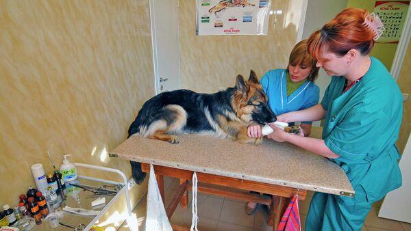 Работа ветеринарной клиники