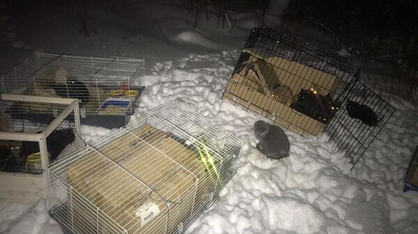 Клетки с котятами, найденные на объездной дороге на Нижневартовск