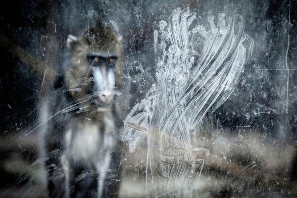Miguel Ángel Rubio Robles. Работа победителя конкурса GDT European Wildlife Photographer of the Year 2019