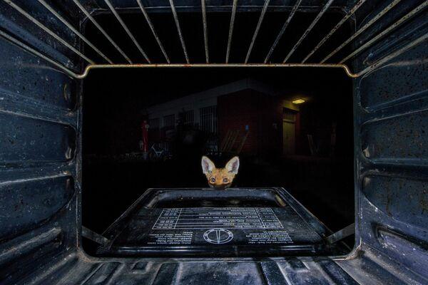 Jon Andoni Juarez Garcia. Работа финалиста конкурса GDT European Wildlife Photographer of the Year 2019