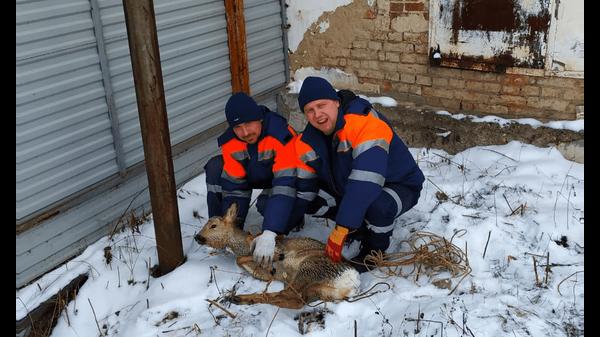 В Башкирии спасатели поймали косулю